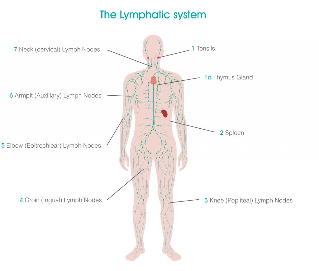Bodytonic Lymphatic Vessel Graphics SE16 London